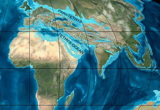 Miocene World Map.Miocene Hominoid Radiation