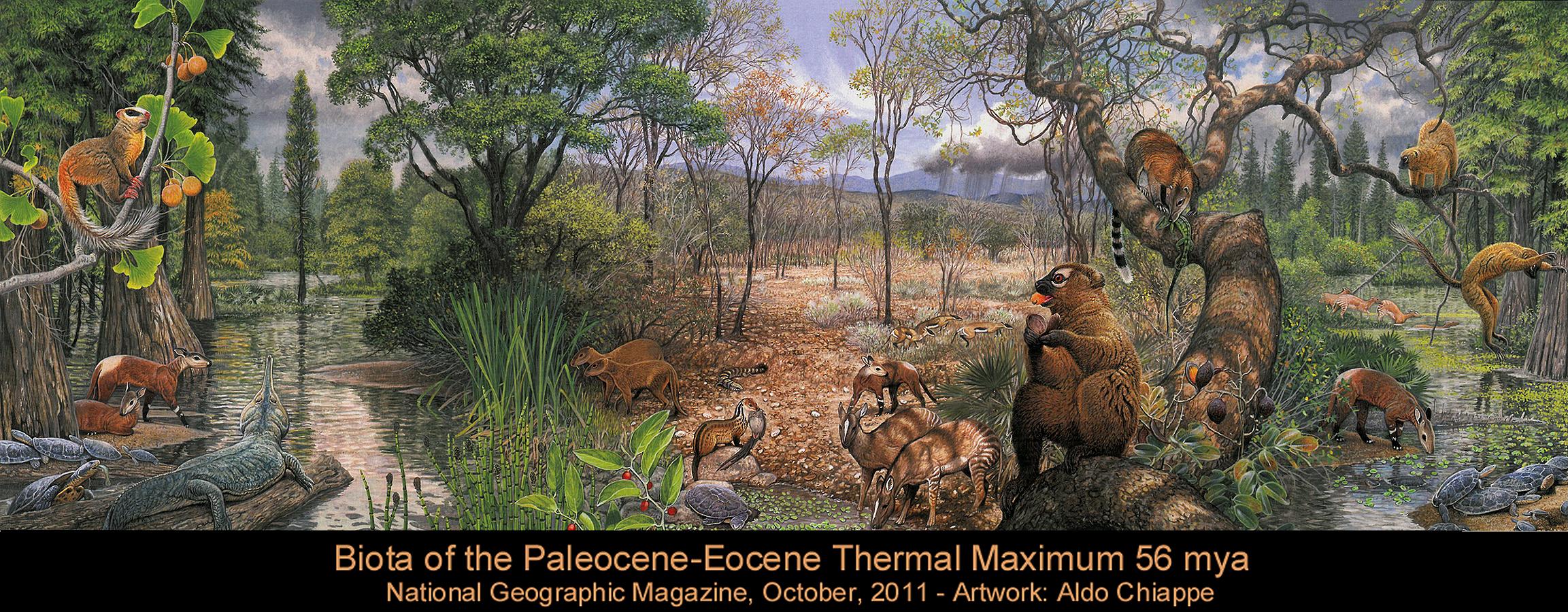 Biota Of PETM Paleocene Eocene Thermal Maximum