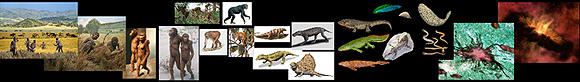 Evolution-Involution Slideshow Collage